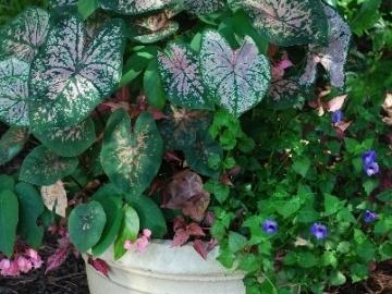 faulkner-garden-summer-2011-4