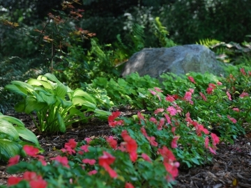 faulkner-garden-summer-2011-7