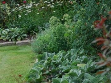 majure-perennial-garden-2